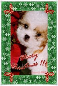 ♪♭ Merry Christmas!!! ♪♭
